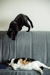 Жир атакают! (donnicky) Tags: cat domesticanimal home hunting indoors lying nopeople pet publicsec sleeping twoanimals лилу марсель