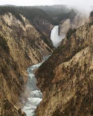 Lower Falls in Yellowstone's Grand Canyon (dan.weisz) Tags: yellowstone yellowstonepark lowerfalls grandcanyon waterfall river yellowstoneriver