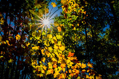 (jdehmel) Tags: sunstar fall oct 2017 tree color leaves fall2017 d7100 oct2017 formar trees sun colorful red orange blue green