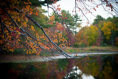 Dusk by a Pond (JimmyJGreen) Tags: fall autumn newengland raynham pond lake hewittpond color tree reflection sunset dusk woods