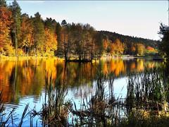 Gräser am See by almresi1 - Ebnisee, Naturpark Schwäbisch-Fränkischer Wald