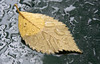 Wet Leaf Hood (Orbmiser) Tags: nikkor28105mmf3545afd d90 fall nikon oregon portland carhood leaf raindrops