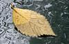 Wet Leaf Hood (Orbmiser) Tags: nikkor28105mmf3545afd d90 fall nikon oregon portland carhood leaf raindrops