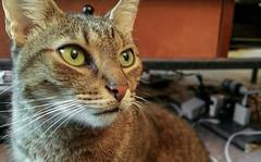 103: Cat, Again