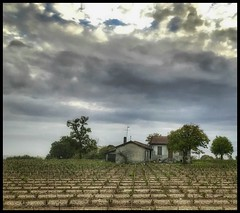 The little vineyard.... (Sherrianne100) Tags: rural humble wine vineyard aquitaine medoc bordeaux france