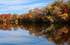 Jacob's Pond from 123 (Read2me) Tags: autumn norwell jacobspond trees reflection water lake pond leaves skyclouds cye friendlychallenges perpetualchallengewinner pregamewinner challengeclubwinner thechallengefactory gamesweepwinner gamex2 15challenges storybookotr