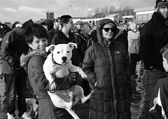 Now smile (Andy WXx2009) Tags: outdoors people monochrome beach dog streetphotography blackandwhite pet candid porthcawl wales sunglasses women men charityswim femme staffordshireterrier crowd meeting portrait europe coneybeach