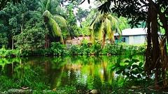 Beauty of Bangladesh (shezankhondoker) Tags: bangladesh beauty bd green dream heaven home sweet