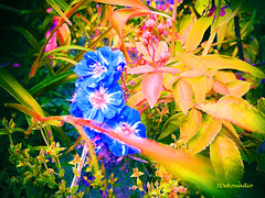 Flowers & Plants (Stephenie DeKouadio) Tags: canon art artistic abstract abstractart abstractflower abstractflowers beautiful beauty artwork painting