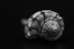 Macro Monday - Souvenir -Explore (peggypryor68) Tags: macromonday 10162017 october 2017 macro souvenir shell