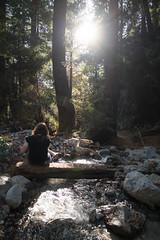 untitled-2.jpg (mat3o) Tags: ca trees hike waterfall mcwaybeach bigsur trail redwoods ewoldsentrail route1 coast california pch