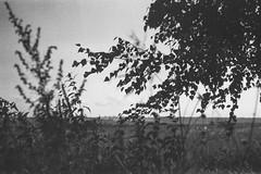 fortepan-100-11 (Vasily Ledovsky) Tags: 35mm expired film forte bw fortepan 100 blackwhite voigtlander canon bessat ltm 50mm 18 monochrome
