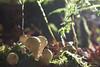 Kleine Pilzidylle (leaving-the-moon) Tags: 2017 201710 autumn goodlight herbst kraichgau natur nature season