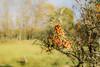 20171014-DSC_0684 (M van Oosterhout) Tags: amsterdamse waterleiding duine natuur nature flora fauna landschap landscape dutch holland amsterdam nederland netherlands animals