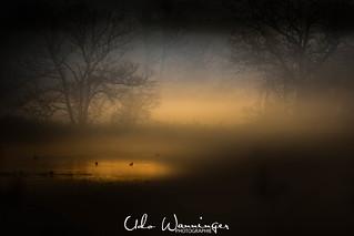 Nebel an der Reuss
