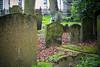 old graves (pamelaadam) Tags: 2015 digital spring oxford engerlandshire april animal dog people lurkation faith spirituality fotolog thebiggestgroup