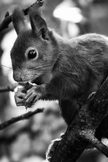 Hörni in black & white