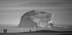 Bass Rock Golf (ianbrodie1) Tags: bass bassrock backdrop rock volcanic lighthouse northberwick lothian scotland eastlothian seascape sea ocean golf golfers blackwhite nikon