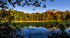 (viktorhbt) Tags: autumn herbst farben wasser bunt wald holz see baum himmel natur nature color tree