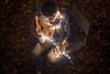 Autumn Floor (Evan's Life Through The Lens) Tags: camera lens glass sonya7rii vintage minolta light pixie string stringlight beautiful bright white blue purple amazing instagram outdoors leaves autumn guitar music bokeh