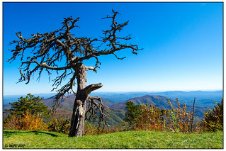 Gnarly Tree on the Blue Ridge Parkway -Explored- DSC_7547