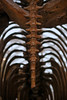 Prehistoric Tail (Mondmann) Tags: prehistoric fossil skeleton mammutamericanum iceage pleistoceneepoch pleistocene mastodon americanmastodon megafauna animal prehistoricanimal mammal cincinnatinorthernkentuckyairport cvg rearview tail posterior mondmann canonpowershotg7x