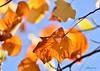 Season of colors (Shantanu_NL) Tags: colors season autumn leaves sky sun shine sunny tree garden d7200 nikon 70300mm