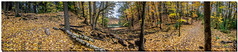 OCTOBER 2017  NGM_6127_2675-PANO-22 (Nick and Karen Munroe) Tags: panorama pano heartlakeconservationarea heartlake heartlakeconservation colour canada color colors colours colourful fall fallcolors fallsplendor foliage beauty brampton beautiful brilliant nikon nickmunroe nickandkarenmunroe nature nickandkaren nikon2470f28 munroedesignsphotography munroedesigns munroephotography munroe karenick23 karenick karenandnickmunroe karenmunroe karenandnick karen landscape leaves