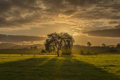 Shadowlands (zebedee1971) Tags: sun sunlight light paddock farm land farmland farmer hills dairy cows pasture waikato hamilton new zealand green clouds cloudy shadow