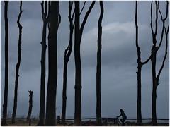 Im Gespensterwald (kurtwolf303) Tags: bäume himmel person biker sky clouds trees silhouette monochrome germany deutschland gespensterwald olympusem1 omd microfourthirds micro43 systemcamera mirrorlesscamera spiegellos kurtwolf303 mft unlimitedphotos dark dunkel scherenschnitt europe gegenlichtaufnahme nienhagen mecklenburgvorpommern europa ostsee 250v10f nienhägerholz 500v20f fischlanddarszingst 800views topf25 topf50 topf75