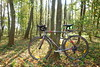 road bike in the forest (nick popa) Tags: bike autumn forest domain light natural outdoors mogosoaia romania sun