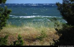 20150709_06 Krappy shot of green wave framed by grass, OOF pines, & heat-distorted horizon | Sandviken, Gotland, Sweden (ratexla) Tags: ratexlasgotlandtrip2015 gotland 9jul2015 2015 canonpowershotsx50hs sandviken sweden sverige scandinavia scandinavian europe beautiful earth tellus photophotospicturepicturesimageimagesfotofotonbildbilder europaeuropean summer travel travelling traveling norden nordiccountries roadtrip journey vacation holiday semester resaresor landscape nature scenery scenic ontheroad sommar onthebeach beach beaches strand stränder green water ocean sea marine balticsea östersjön wave waves våg hav havet vatten vågor
