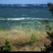 20150709_06 Krappy shot of green wave framed by grass, OOF pines, & heat-distorted horizon | Sandviken, Gotland, Sweden
