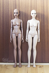 New and old Iplehouse SID body (tjassi) Tags: abjd bjd asian ball jointed doll dolls toys iplehouse sid ashanti lightbrown stella comparison reference real skin
