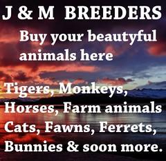 jm (lifelandsrentjupiter) Tags: welcometojmbreeders ifyouhaveboughtananimal youget1horseforfreepleasesendanotecardtomariakezzabunnyresidentclickhernamebelowforprofileandallwillbeokwearebreedingallkindsofanimalsandsellyoungadultanimalslikehorses tigers lions leopards cats ferrets fawns pigs dogs sheep goats poniesandsomemoreallbreedablesrealisticatsmallcostwealsorescueunwantedpetsofanyageandwetakecareofyoursifyouwanttotakeaholidayorbreakatasmallcostfeelfreetoimusatanytimeorsendanotecardwewelcomeall