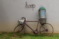 Rusty Bicycle (In Explore) (Johann (Sasolburg, RSA.)) Tags: bicycle rusty abandoned flowers rustycrusty inexplore explored