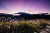 Before Sunrise at Mt. Hehuan (JFLI0325) Tags: leica m10 21mm superelmar asph taiwan 南投縣 仁愛鄉 合歡山 滑雪山莊 高山芒 日出 sunrise lee12hard 霞光