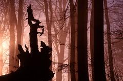 rhn01006P (m-klueber.de) Tags: rhn01006p 19991205 kuppenrhön herbst winter stallberg hessischeskegelspiel hessisches naturwaldreservat wald totholz wurzel stamm bergwald edelholz laubwald rot licht gegenlicht nebel nebelwald kegelspiel nördliche vorderrhön montaner rhön deutschland 1999 rhn01006 mkbildkatalog bildauswahl portfolio