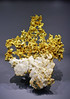 Native gold and quartz - Galerie de minéralogie et de géologie, Paris (Monceau) Tags: native gold quartz muséenationaldhistoirenaturelle paris minerals specimins galeriedeminéralogieetdegéologie