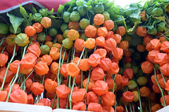 DSC_7544 London Columbia Road Sunday Flower Market Orange Chinese Lanterns (photographer695) Tags: london columbia road sunday flower market chinese lanterns orange physalis alkekengi is relative p peruviana it easily identifiable by large bright red papery covering over its fruit which resembles paper