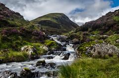 Loch Skeen Runoff (daedmike) Tags: moffat scotland greymairstail lochskeen hill burn heather purple