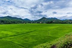 Zelený koberec natažen (zcesty) Tags: vietnam14 rýže pole krajina hory vietnam phongnha dosvěta quảngbình vn