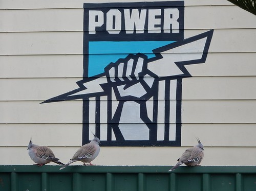 Powerful Pigeons