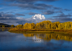 Geese in front of Mt. Moran at Oxbow Bend, Grand Teton National Park, Wyoming (diana_robinson) Tags: geese fall autumn aspentrees mtmoran oxbowbend grandtetonnationalpark wyoming landscape fallscene yellowleaves