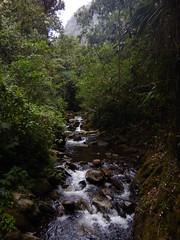 Small stream in Cocora valley (Christophe Maerten) Tags: colombia colombie jungle cauca huila  paramo tierra indiguena native people parque natural parc volcan volcano vulkaan valle de cocora stream rivier