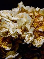 mineral calcite (JoelDeluxe) Tags: arizonasonora desert museum tucson az joeldeluxe cacti heat plants wildlife zoo botanical garden minerals displays gardens birds