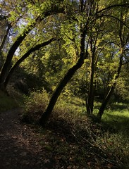 Oaks Bottom Wildlife Refuge (J K Amero) Tags: pnw oregon portland pdx trees autumn refuge path