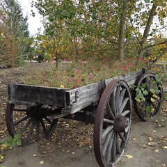 Autumn Textural Tuesday (Mr. Happy Face - Peace :)) Tags: htt cans2s spokes flowers wagon pioneerdays 1900 gardening pink art2017