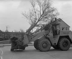 Negative No: 1964-0765 - Negatives Book Entry: 25-03-1964_Parks_Tree Lifting Machine at Wythenshawe (archivesplus) Tags: manchester england 1960s townhallphotographerscollection excavator clark