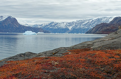 Autumn in Greenland (Waldemar*) Tags: greenland thearctic scoresbysund rypefjord fjord autumn fall colors red orange nature season landscape iceberg mountains kingchristianxland kangertittivaq ostgrönland